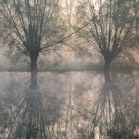 Warm spring fog and willow reflections / Warme lente mist en knotwilg reflecties