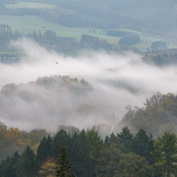 Fog in the Semois valley