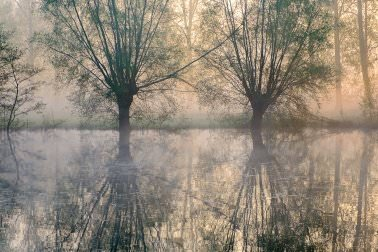 Warm spring fog with willow reflections