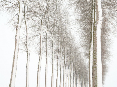 Endless trees in the winter