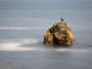 Northen Ireland / Cormorant on rock